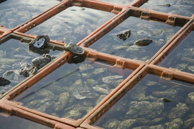 Bay Landing Oysters Assateague Ocean City MD