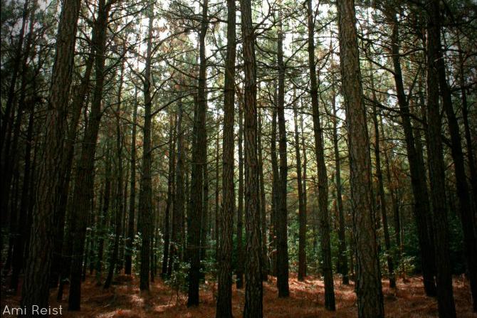Redden State Forest Hike Ami Reist