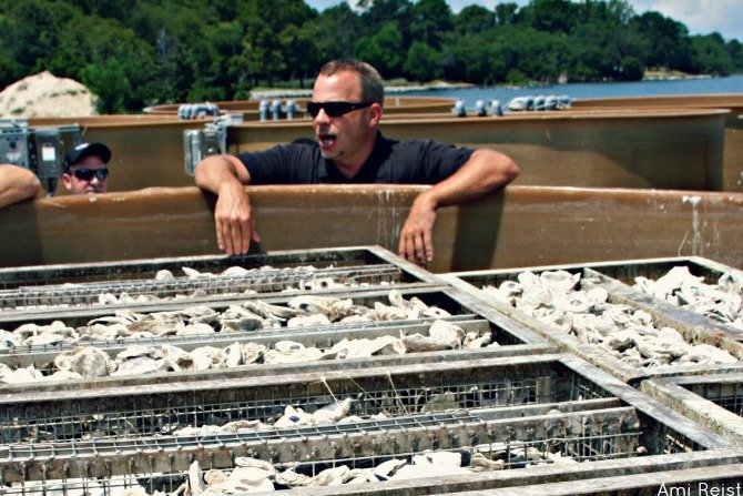 Oyster Recovery Partnership Ami Reist