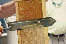 Eastern_Shore_Honey_Bees_1_2