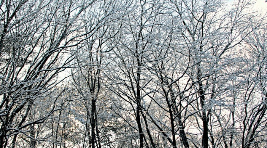 How to Care for Trees in the Winter - Ocean Pines, MD