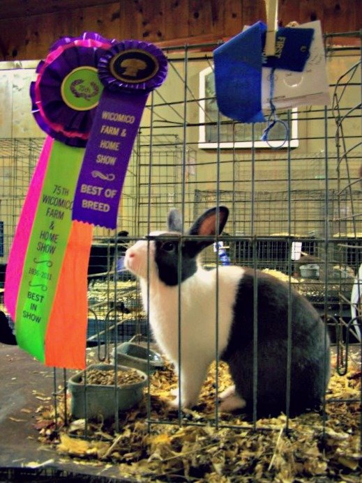 Wicomico_Farm_and_Home_Show_Rabbit2
