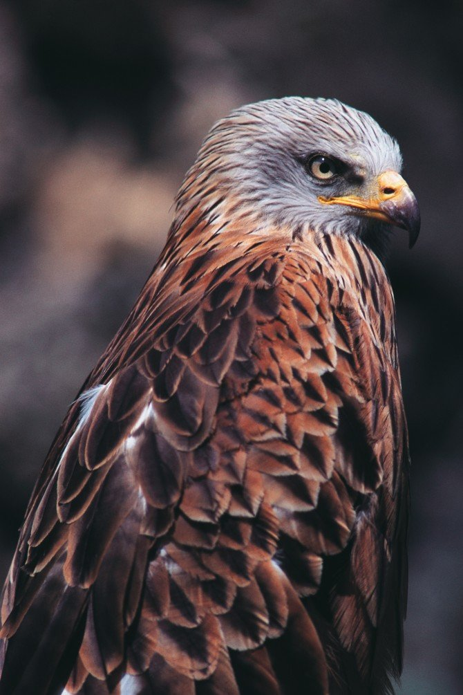 bird-00052