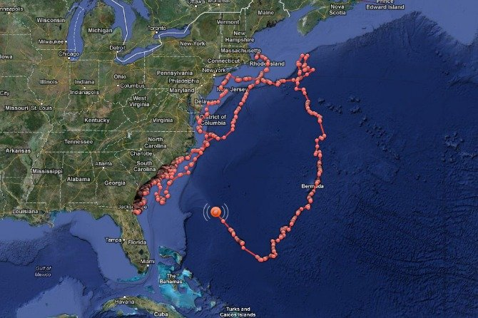 Mary Lee Shark Tracking Ocean City MD