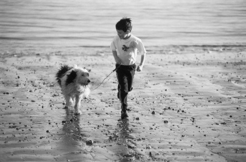 boy beach dog_72365722