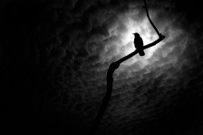 crow with light behind it and clouds black and white_28046275