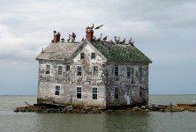 Photo from chesapeakebay.net