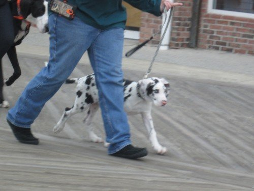Highlights from the 19th Annual Boardwalkin' for Pets