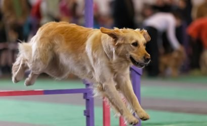 Dog Show Top Dog: Denise Milko Behind the Ring, and What it's Like