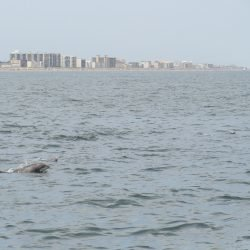 Dolphins from the Sea Rocket