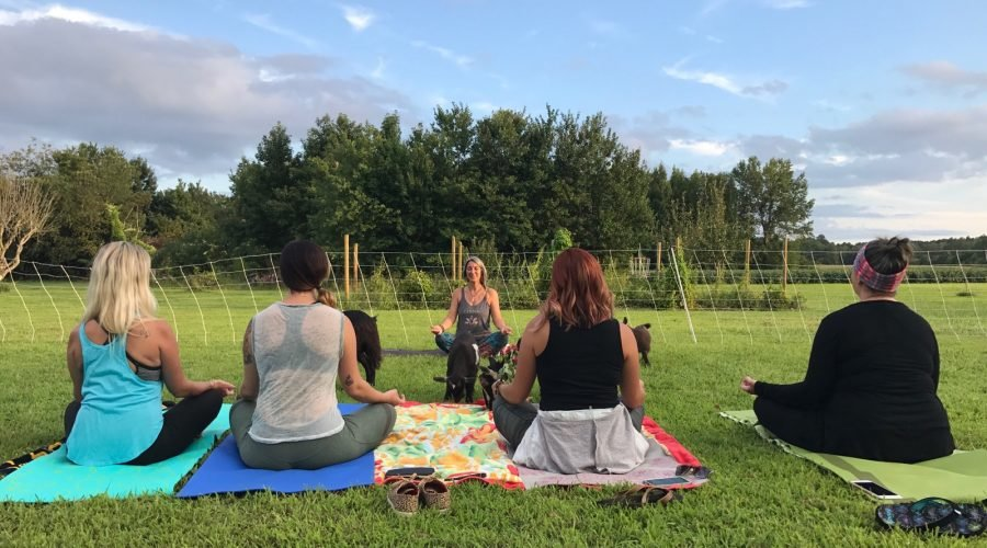 sunset goat yoga with goats playing in field as people meditate