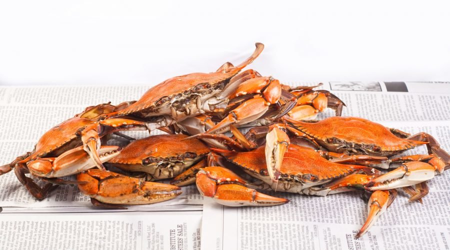 Steamed Blue Crabs on Newspaper