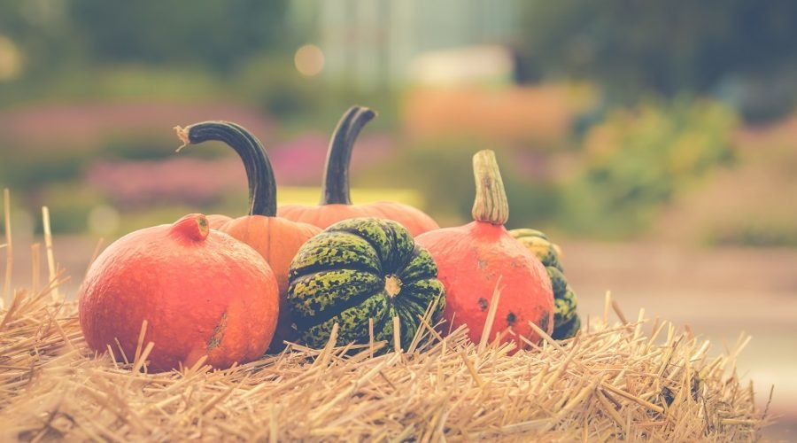 orange and green pumpkins on straw hay