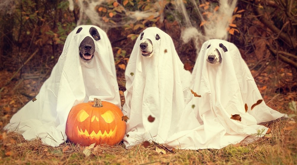 three dogs in costumes with pumpkin