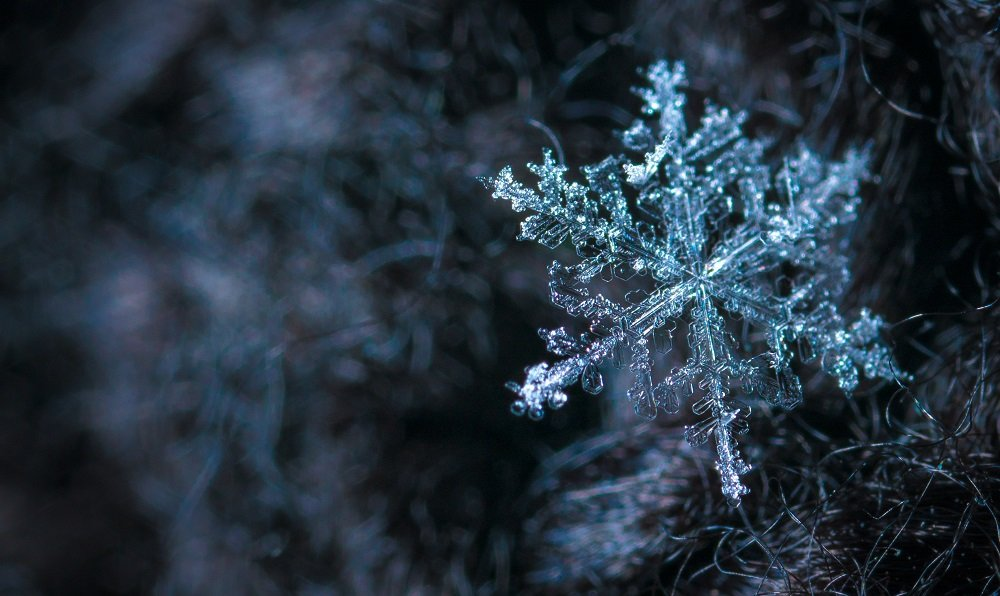 snow flake in cold temperatures
