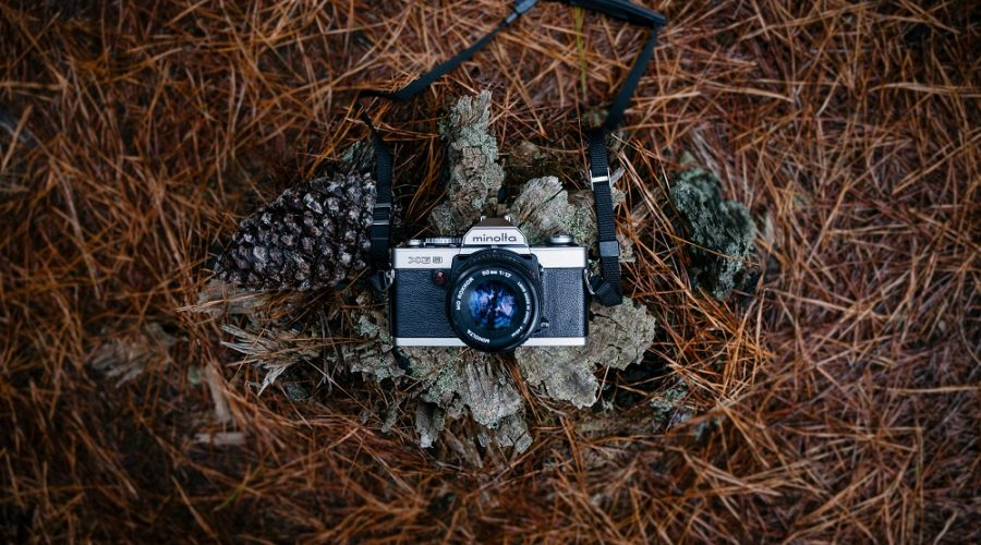vintage camera set on a tree stump surrounded by pine needles